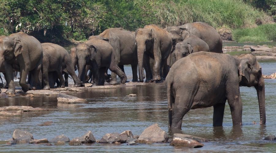 Day 2 - Negombo - Pinnawela - Habarana